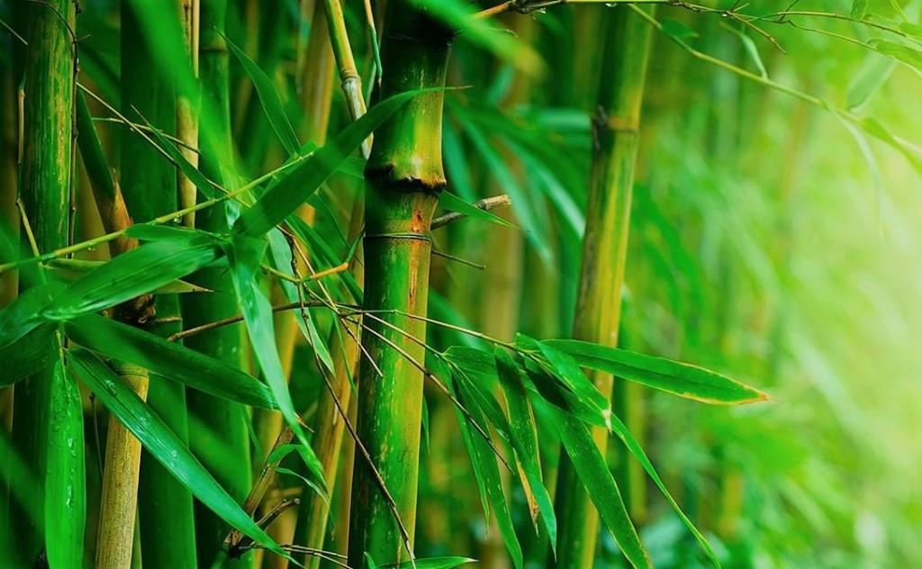 bamboo bed sheets1
