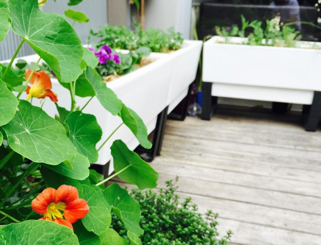 Balcony-veggie1