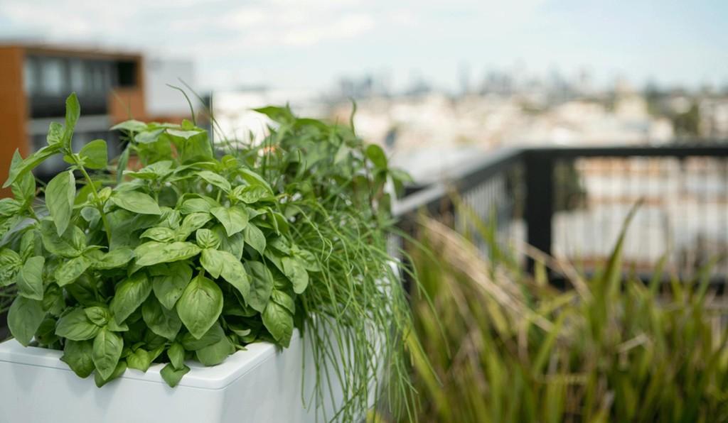 vegetable garden in planters1