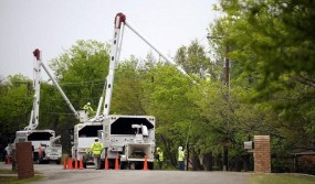 commercial-tree-service