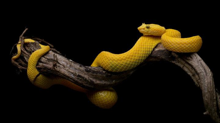 Snake reppeler australia9