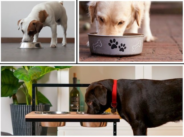 dogs-bowl