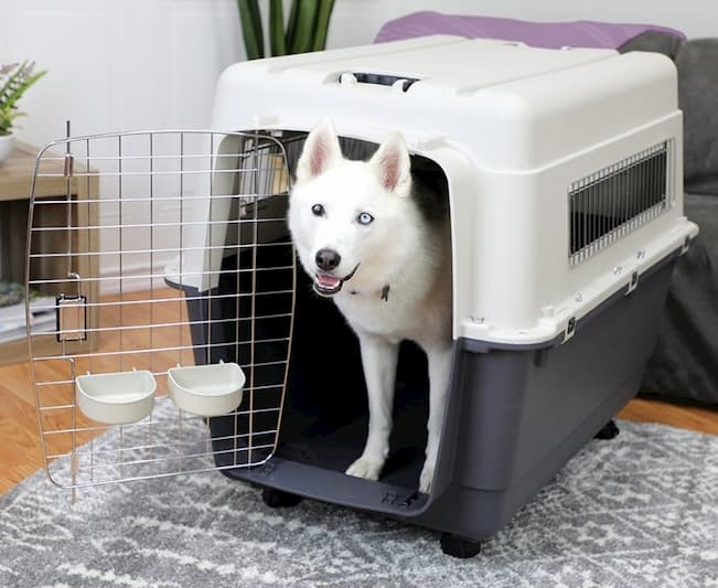 kennel with dog