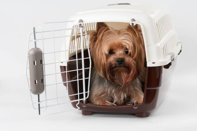 little dog inside airline approved crate