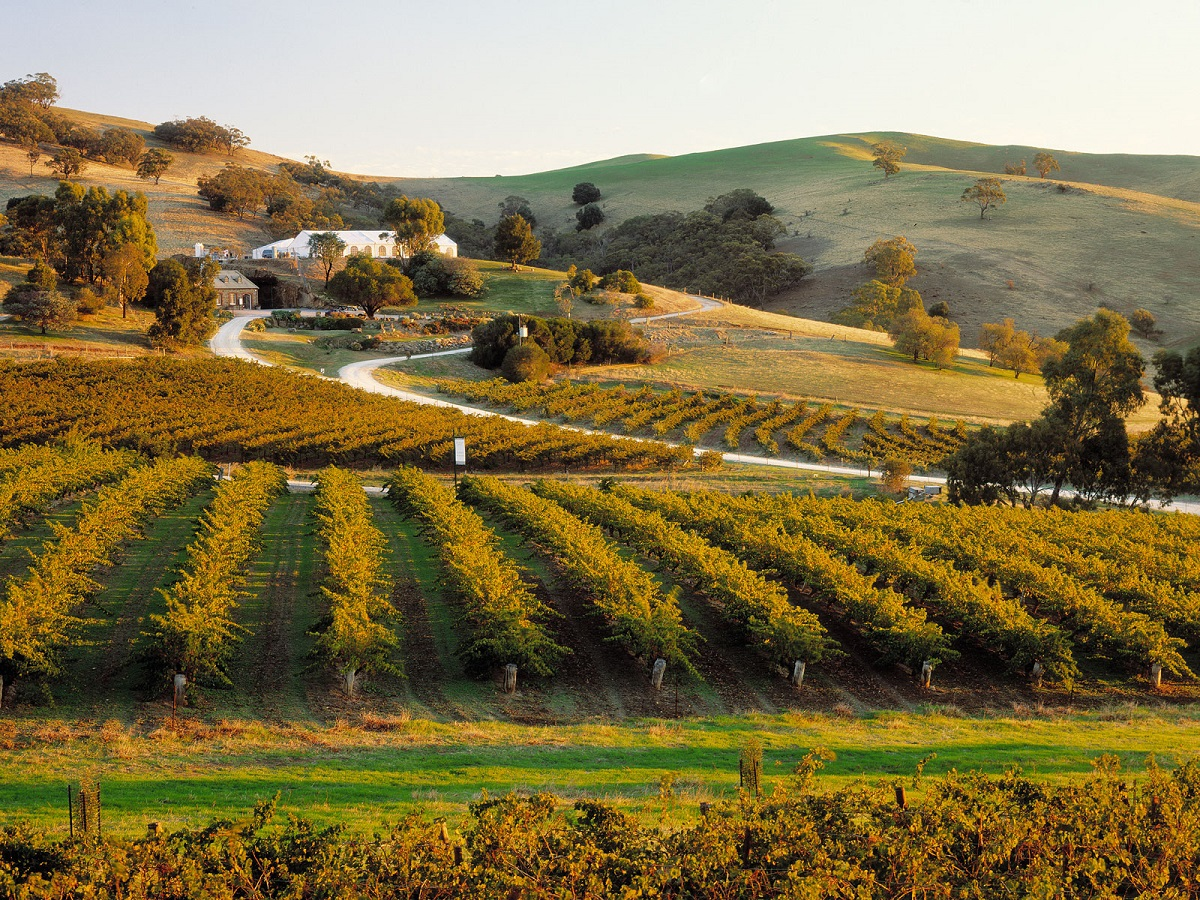 Vineyards in the Barossa Valley of South Australia