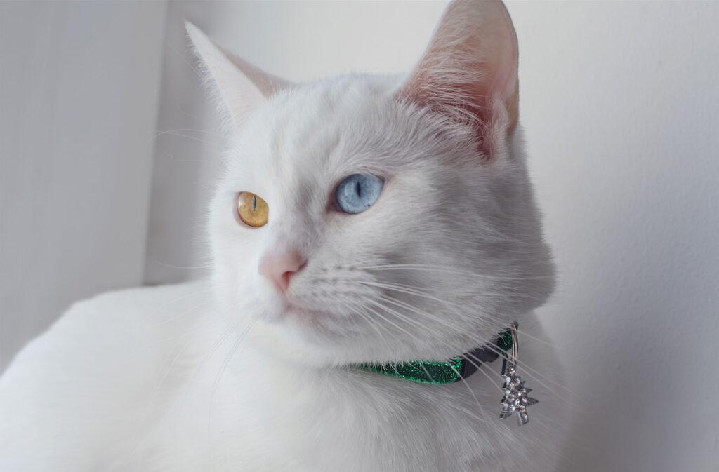 Cat-Collars-Range-image