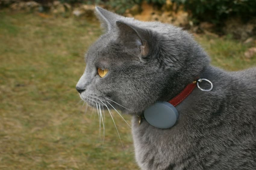 collars-of-necessity-image